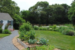 vegetable garden and more